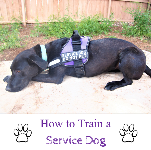 How To Train A Service Dog Service Dogs Service Dog Training Autism Service Dogs