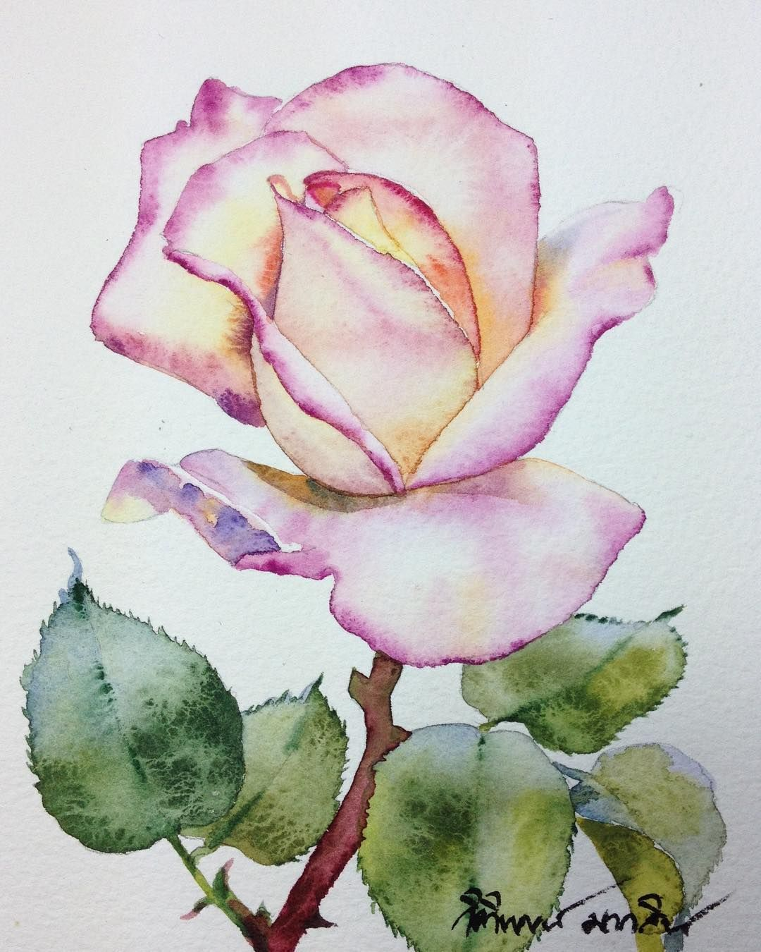 Single Rose Watercolour Flowers Watercolorpainting Watercolorgallery Watercolorist Watercolor Waterblog