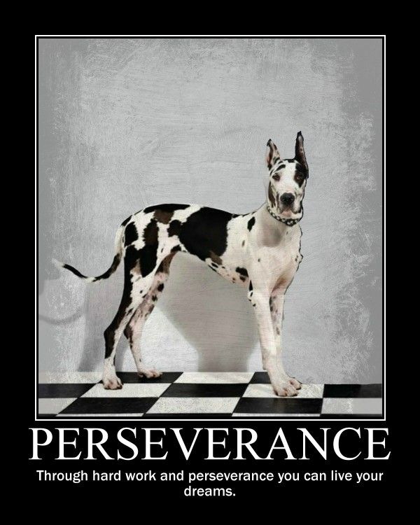 Perseverance Quote Perseverance Quotes Perseverance Dreaming Of You