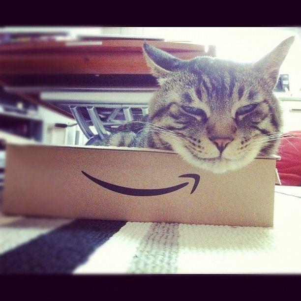 @_daisy   蔵出し夕方ムサシさん。チェシャ猫スマイル。#mck #cat   Webstagram - the best Instagram viewer