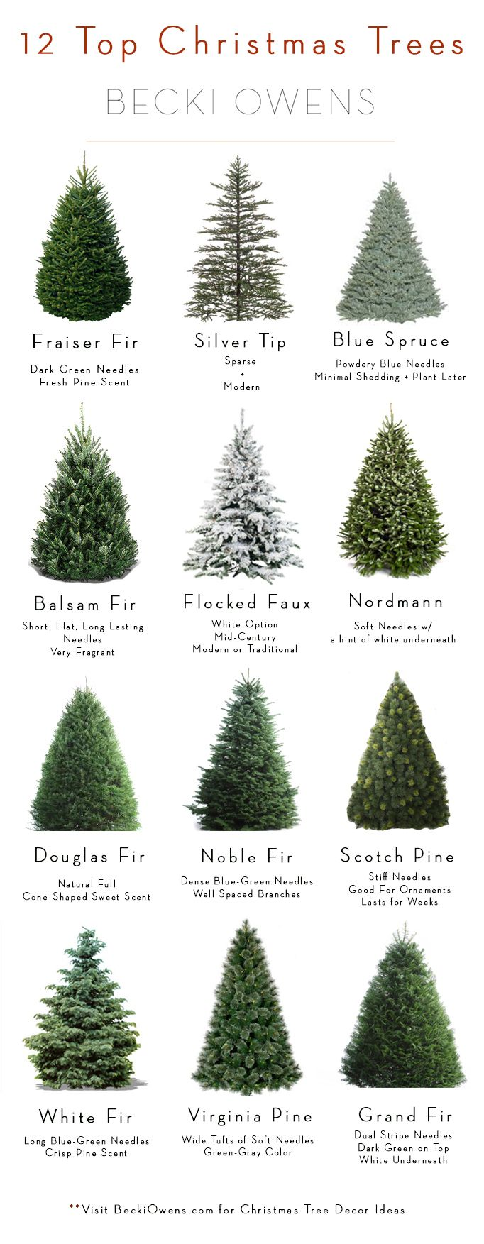Christmas Tree Types.All About Christmas Trees Guide Decoratingbecki Owens