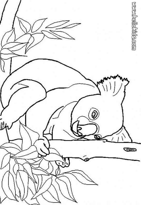 Koala Coloring Page More Australian Animals Pages On Hellokids