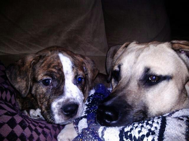 Puppy besties!!