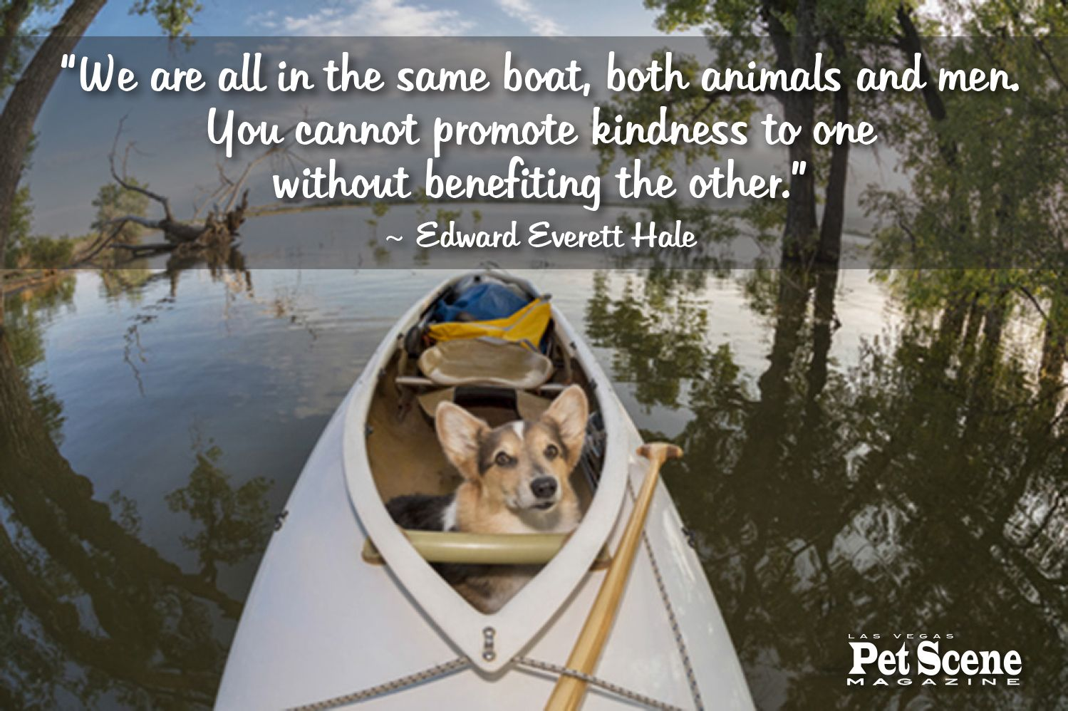 Mutual kindness is beneficial inspirational pets