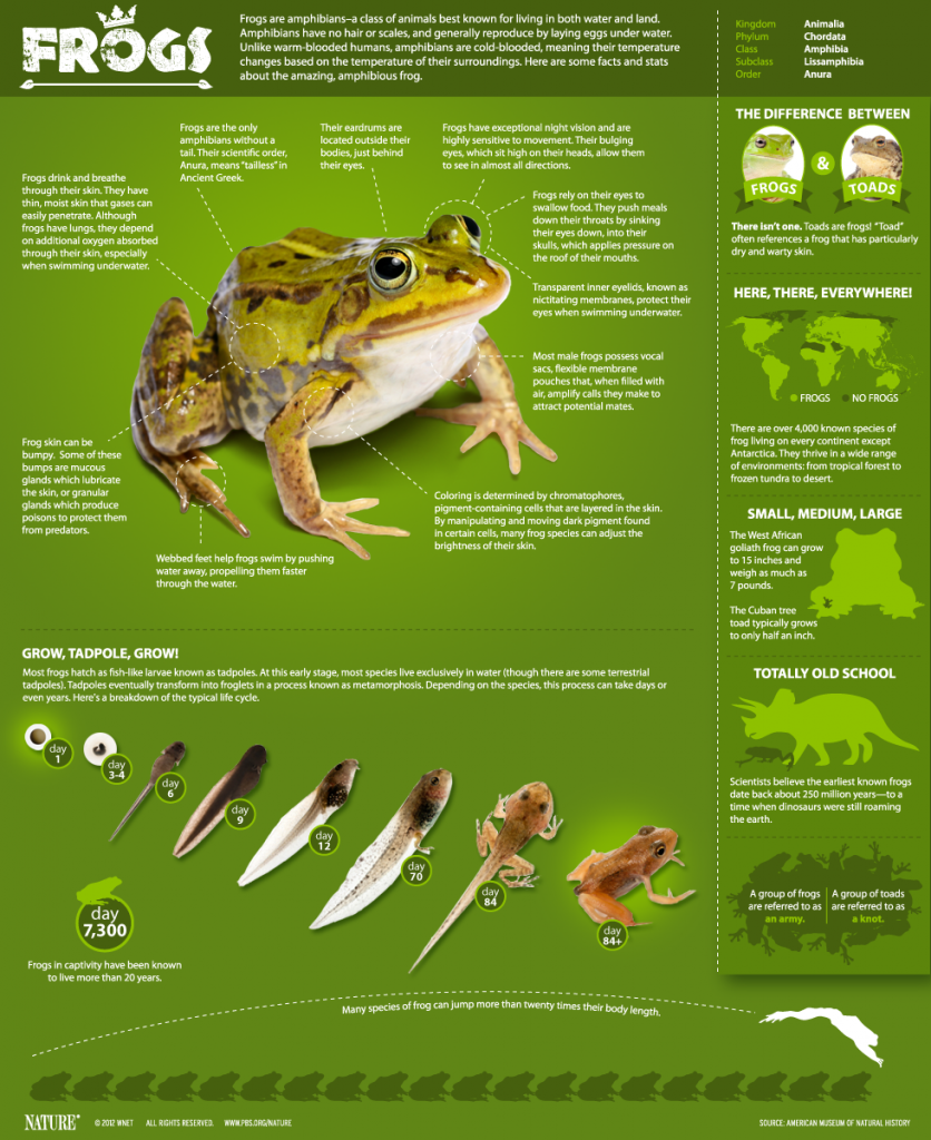 Eight frog species — northern leopard frog 24b6087a1