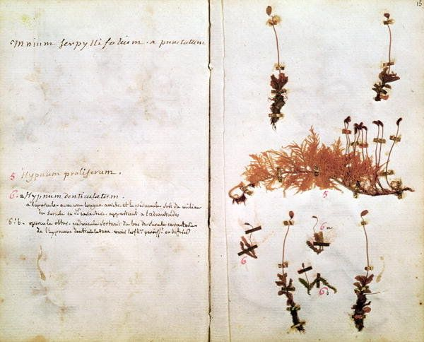 Page 15 from a Herbarium Wall Art Prints by Jean Jacques Rousseau
