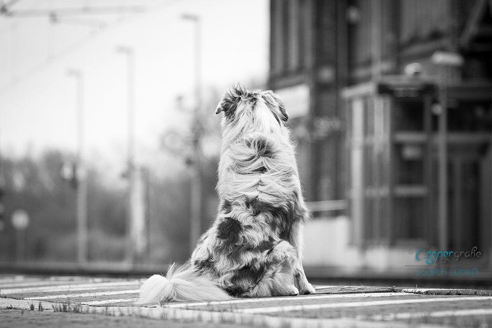 Cooper wartet auf den Zug <3