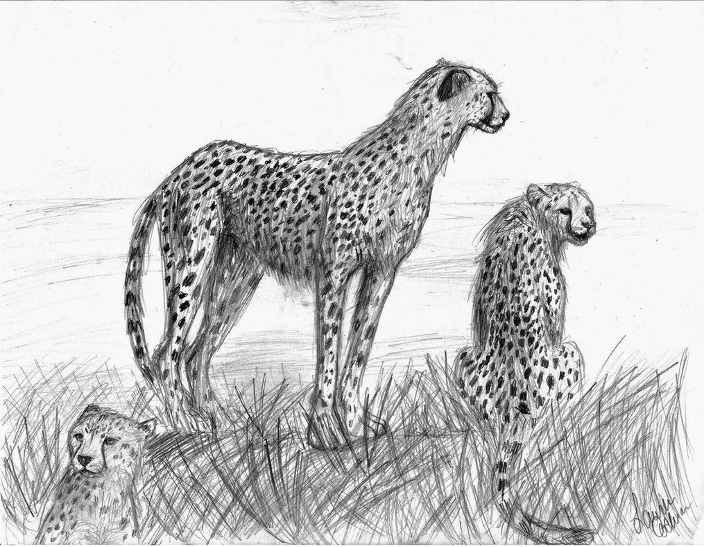 7 best Cheetah images on Pinterest | Cheetahs, Animaux and Cheetah