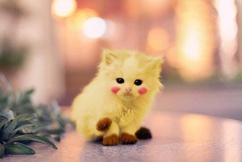 Omg a real pikachu i love it cute animals pinterest cute kitty cat pikachu kitten cats are soooo cute voltagebd Image collections