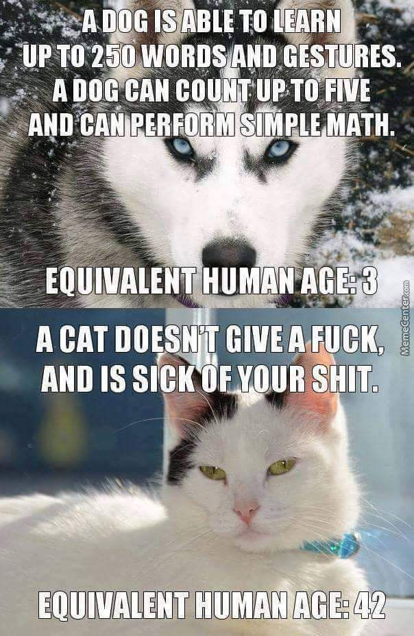 Equivalent Human Age For Dogs And Cats Imgur Cute Funny Animals Funny Cat Memes Funny Animal Pictures
