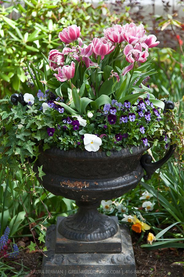 Image Result For White Flower Farm Container Gardening