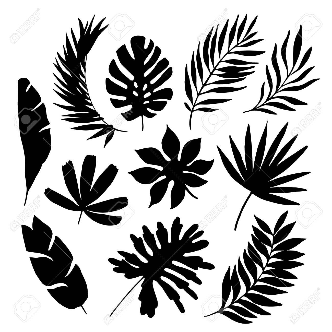 Tropical Leaf Silhouette Elements Set Isolated On White Background In 2020 Leaf Silhouette Leaf Illustration Black And White Leaves No physical item will be shipped. pinterest