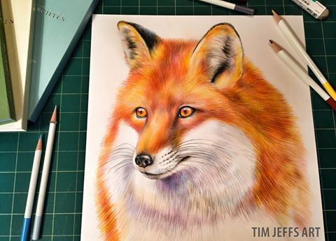 Red fox illustration by @timjeffsart using @tombowusa Irojiten Colored Pencils