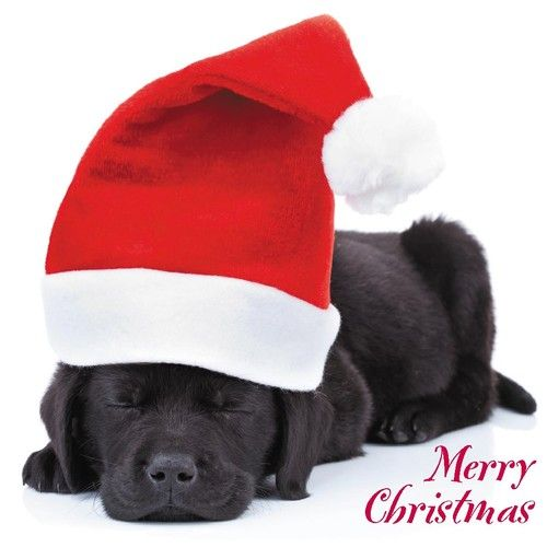 Quality Christmas Cards - Cute & Comedy Santa Dogs Puppies 26 ...