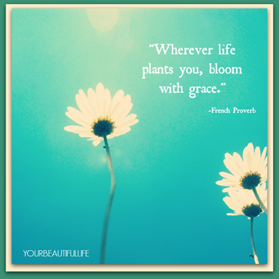 Wherever Life Plants You Bloom With Grace French Proverb Words Of Inspiration Inspirational Words Words Beautiful Words