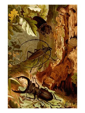 Stag and Longhorn Beetles Premium Poster