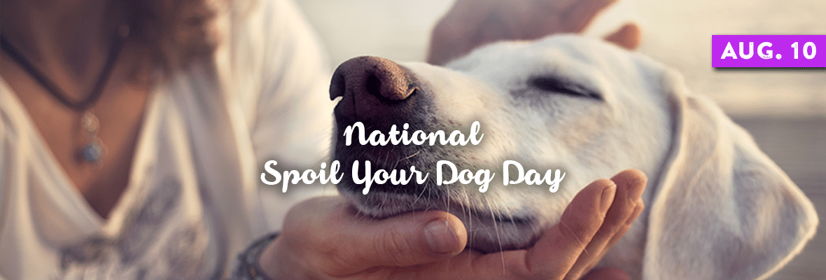 National Spoil Your Dog Day August... Dogs, Your dog