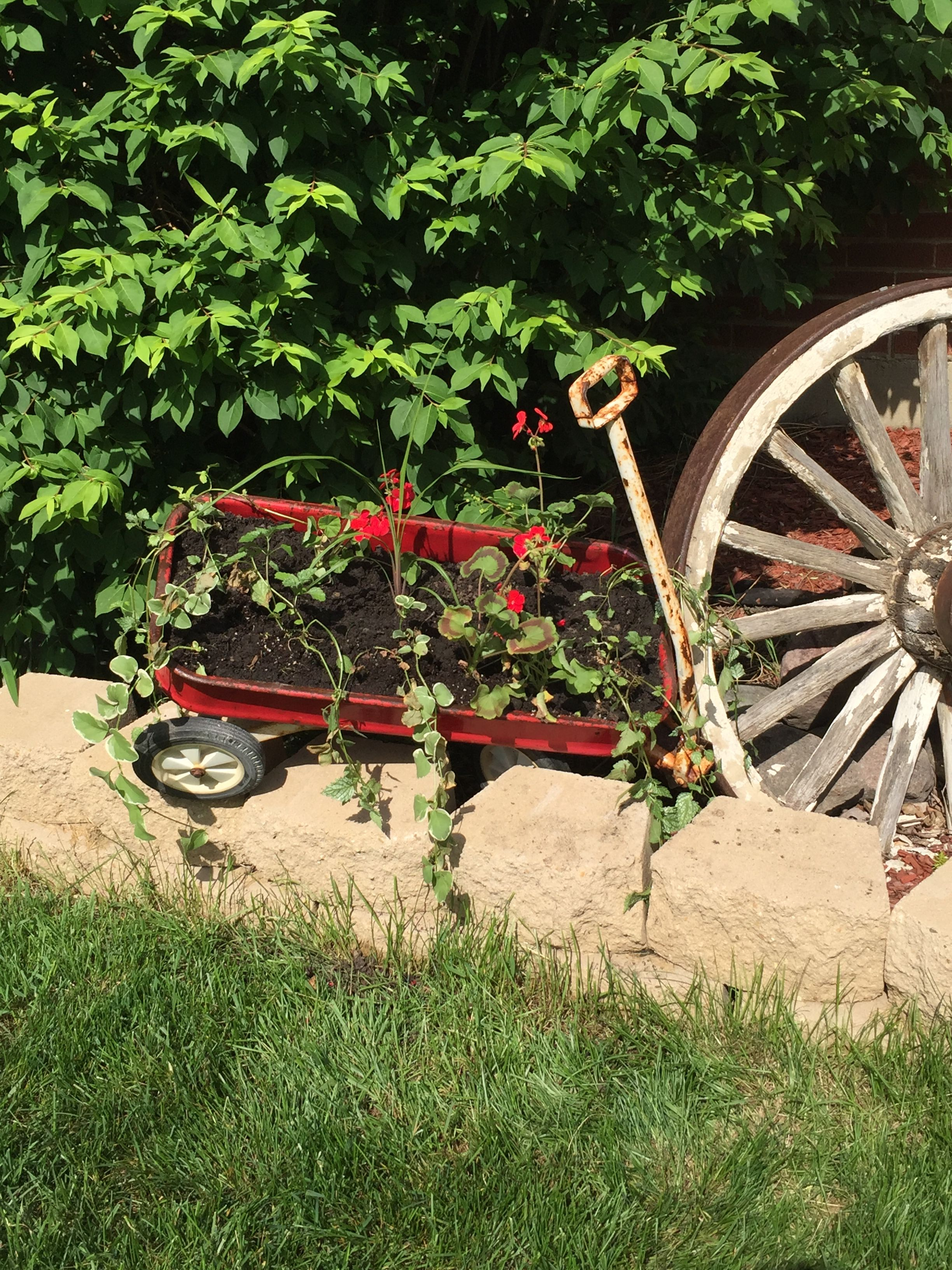 Pin by Rich Guenther on Our Yard | Yard, Moped, Garden