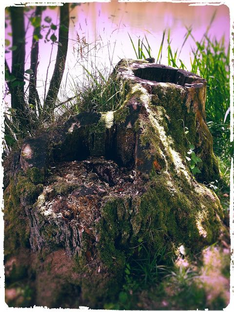 Oldrobel's Fotoreise: tree stump