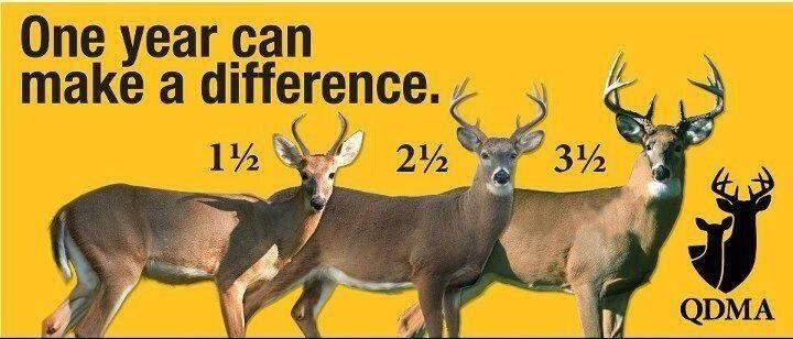 Buck Growth Chart Quality Deer Management Let Them Grow
