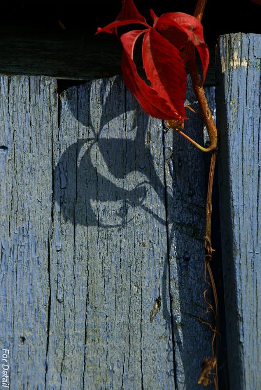 For Detail: Garden