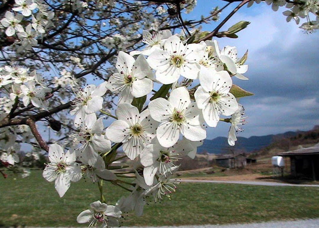 Pin On Tree Photos