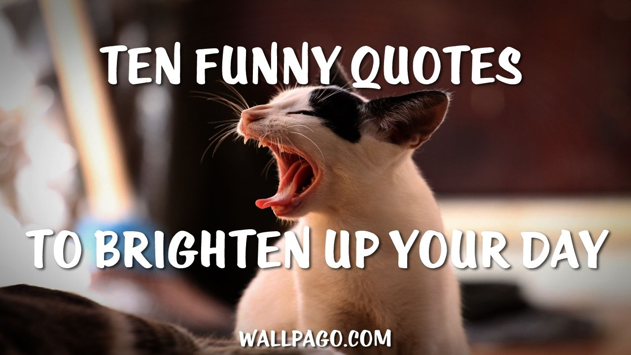 Ten Funny Quotes To Brighten Up Your Day Funny Quotes