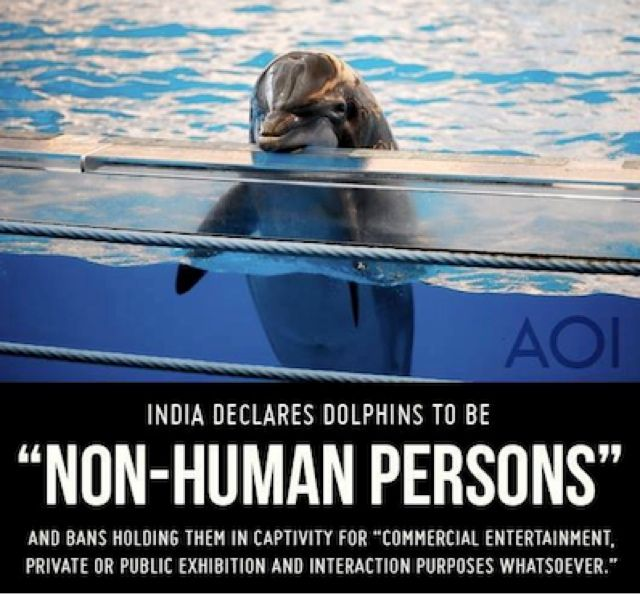 Dolphins have been granted non-human personhood status by the government of India, making India the first nation in the world to recognize the unique intelligence and self-awareness of the cetacean order (a class of aquatic mammals).The decision was announced by Indias Minister of the Environment and Forests which also outlawed captive dolphin shows. The ministry added that dolphins should have their own specific rights. (SOURCE)
