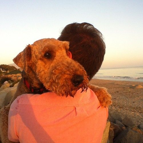 Resultado de imagen para welsh terrier hug