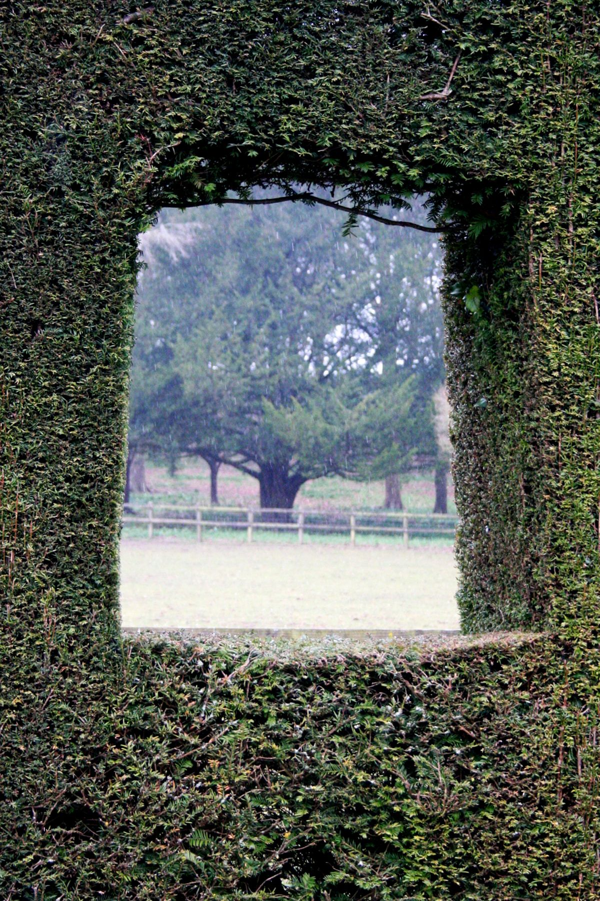 A window the clipped yew hedge to a yew tree growing wild   Our ...