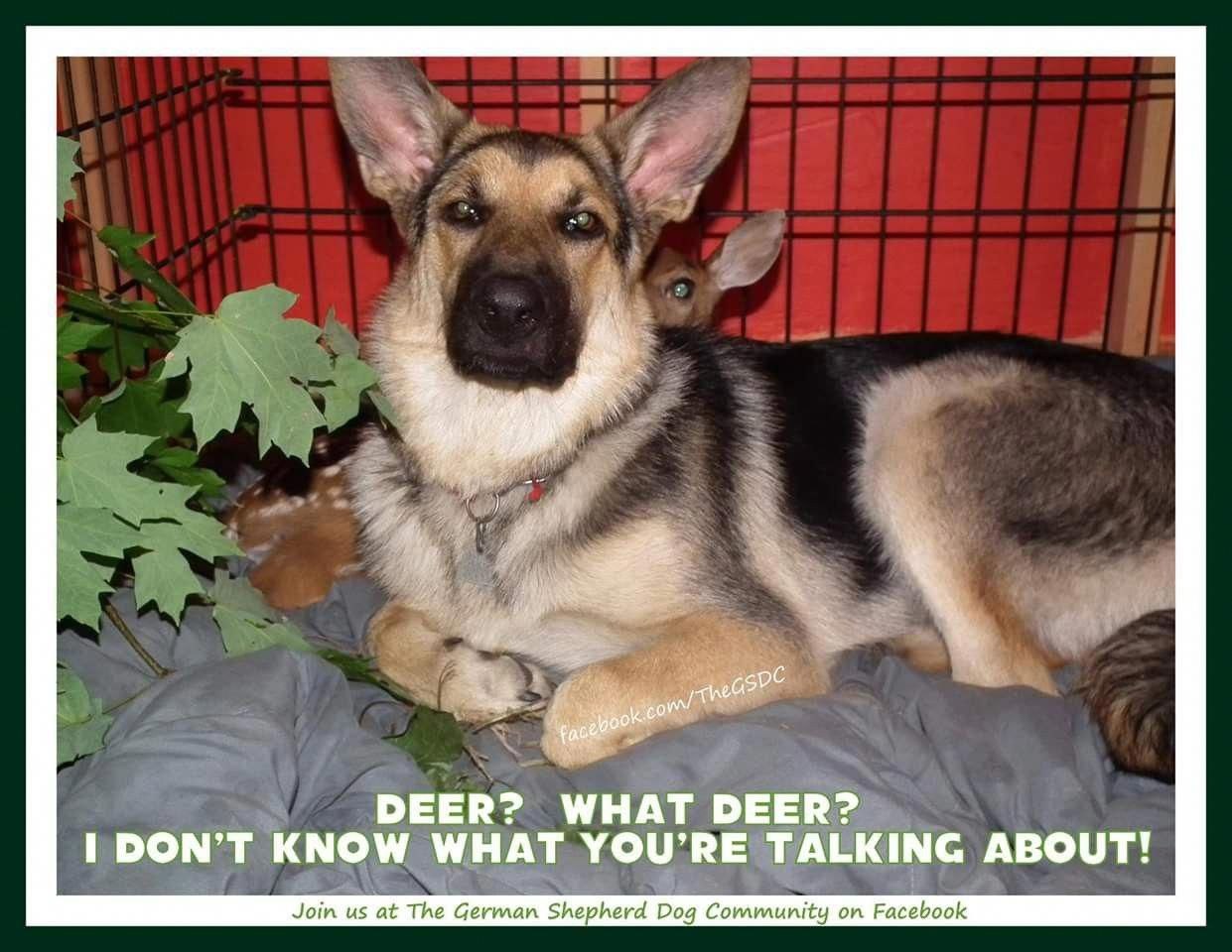 Figure Out Additional Relevant Information On German Shepherd