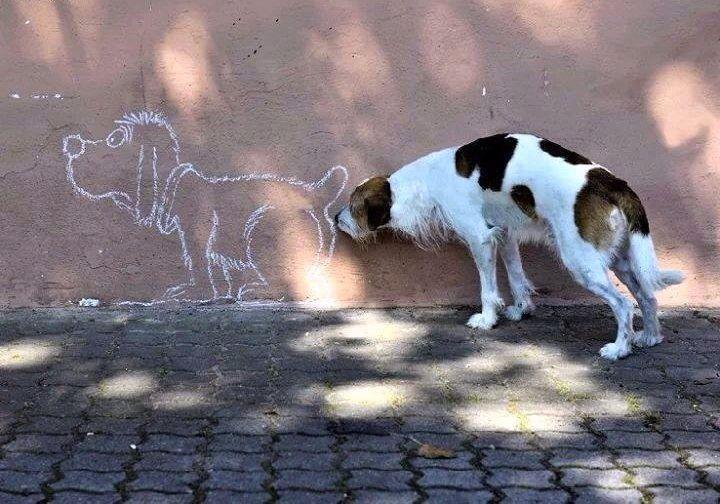 #graffiti #dog