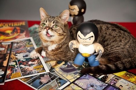Comics Crux- Lil Bub And Wolverine Team Up In Marvel's Augmented Reality App  #MarvelNOW #LilBub