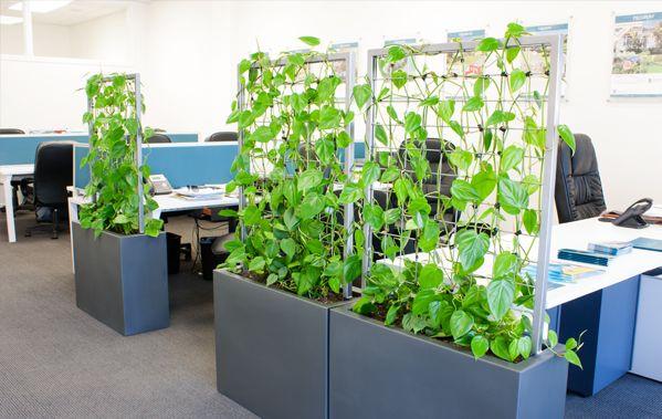 plant screen