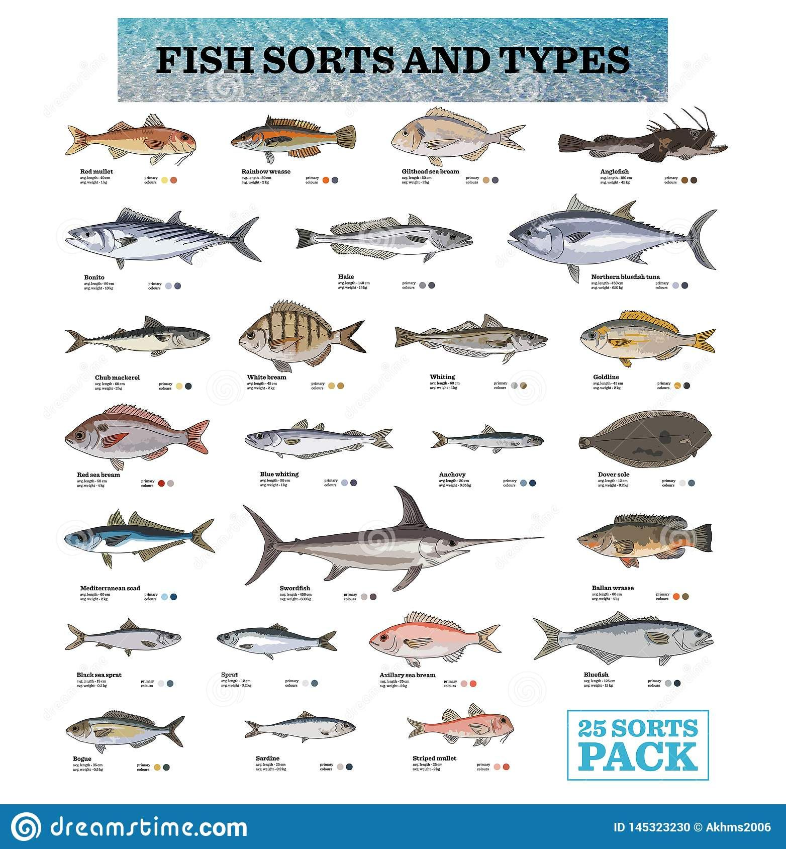 25 Species Of Fish With Its Names Stock Illustration Species Sea Colour