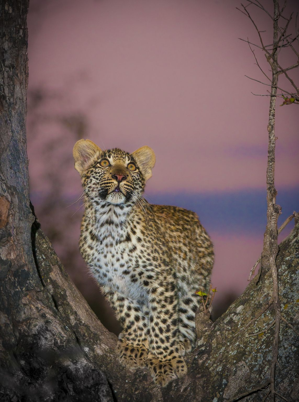 a4468bfdf4 Looking Up by Wim van den Heever on 500px