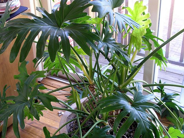 house photo tropical plants indoor house plants managing your in house greens amillionlives