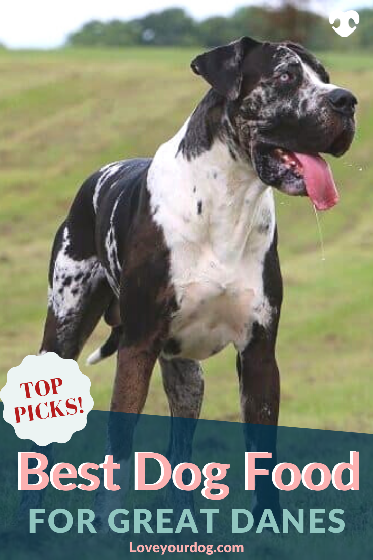 Best Dog Foods For Great Danes Puppies Adults Seniors Great Dane Puppy Best Dog Food Great Dane Dogs