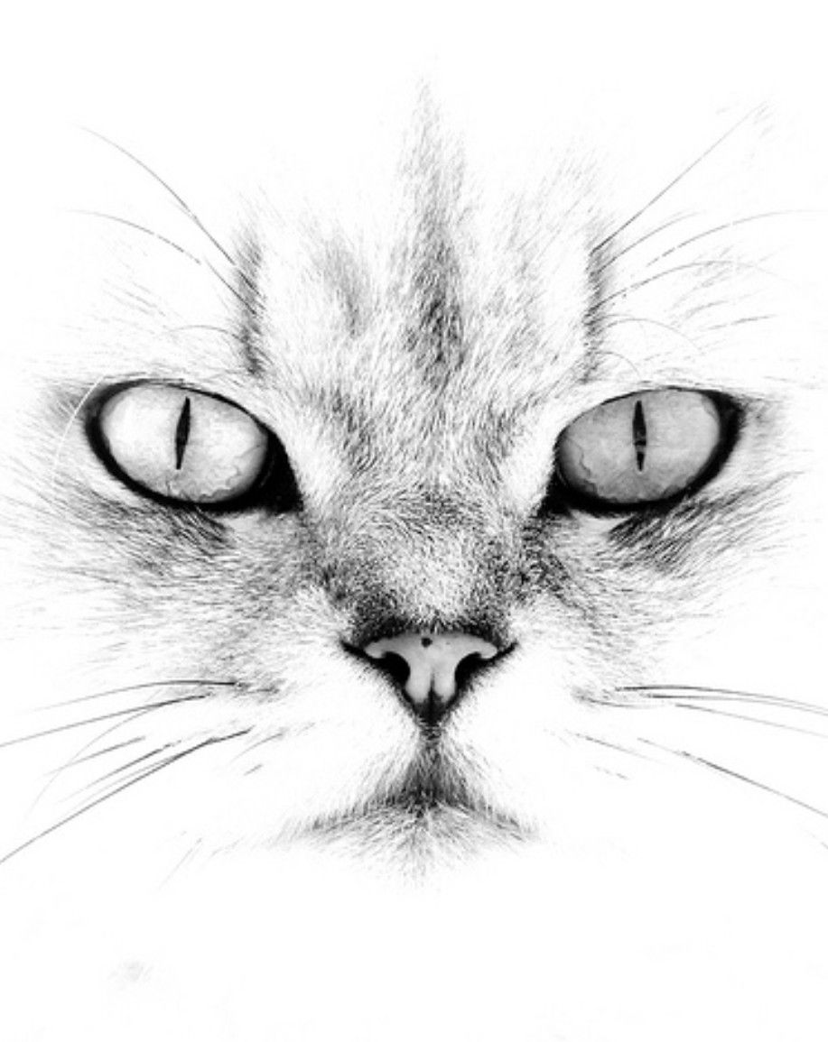 Pin Von Huber Andreas Auf Tattoos Katze Zeichnen Skizzen Kunst Katze Malen