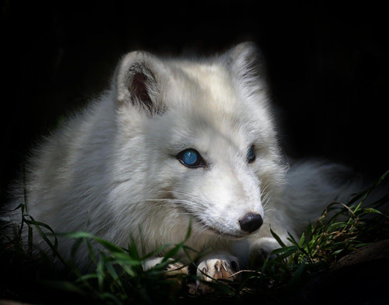name fox eyes - photo #26