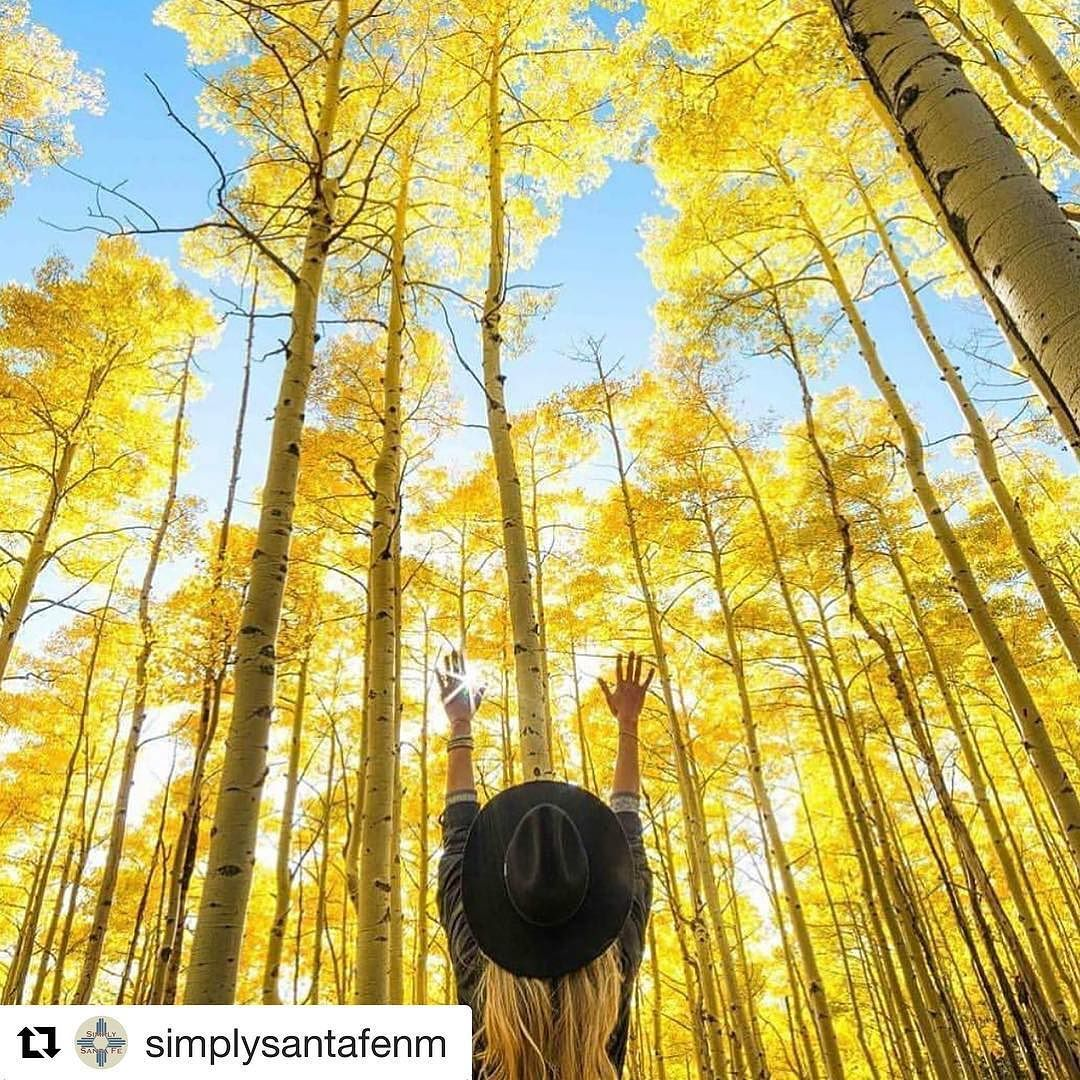 #Repost @simplysantafenm  This sums up how we feel about our beloved Aspens! So happy to see the #simplysantafe hashtag flooded with yellow aspen images.  Thank you for this ah.mazing capture @gogetsomesoul!  #santafenm #aspens #fall #bliss
