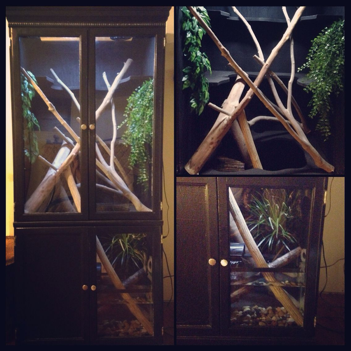 My DIY Chinese water dragon enclosure made from a craigslist
