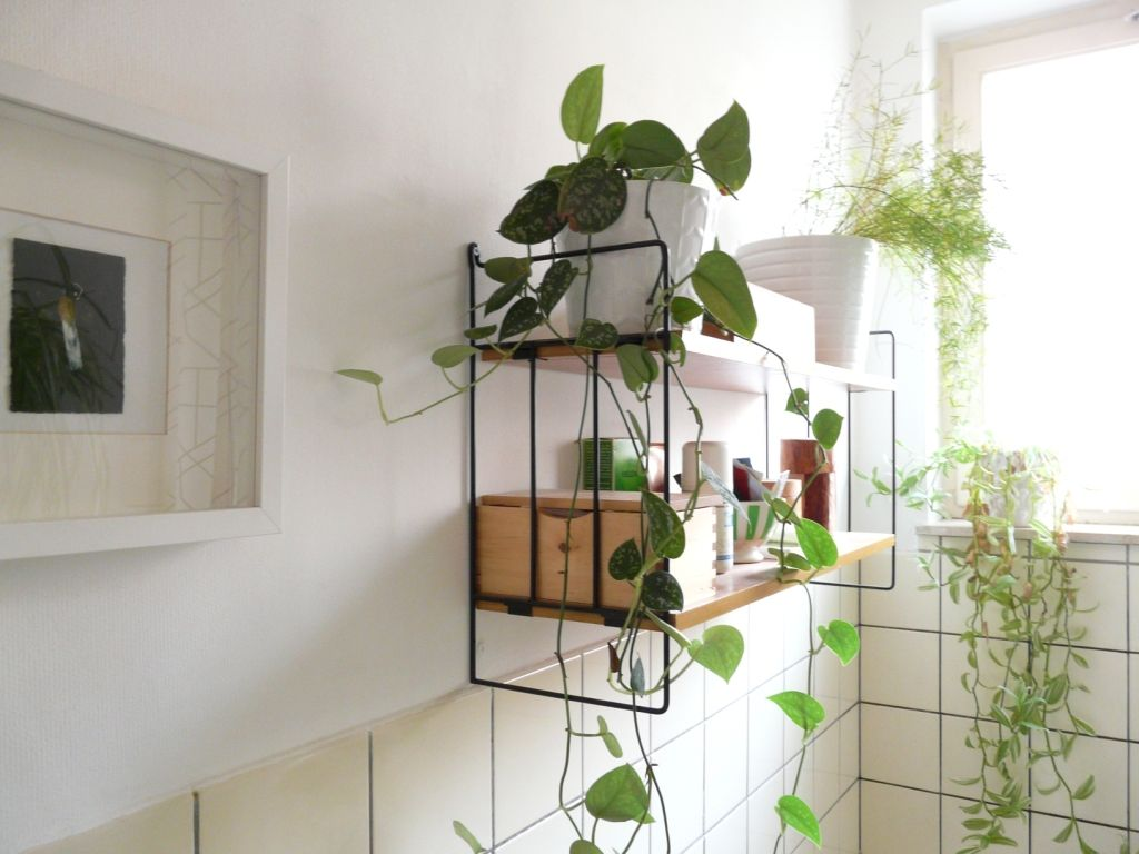 Best Plants That Suit Your Bathroom Fresh Decor Ideas Bathroom Plants Low Light Bathroom Plants Fresh Decor