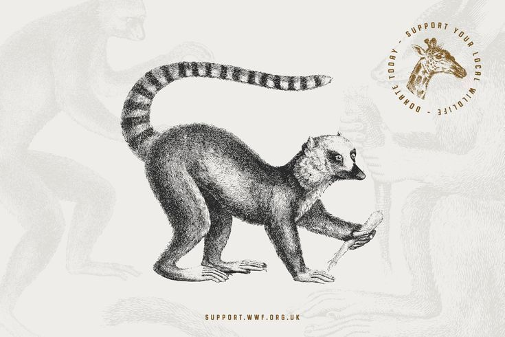 54 Handcrafted Mammal Illustrations Handcrafted#Mammal#Illustrations  ... 54 Handcrafted Mammal Illustrations Handcrafted#Mammal#Illustrations  ... ,