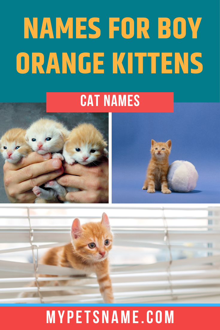 Whether You Want Something That Has King Of The Jungle Vibes Or Something That Reflects Your New Male Orange Cat S Talkative And Cuddly N In 2020 Orange Cat Cat Names