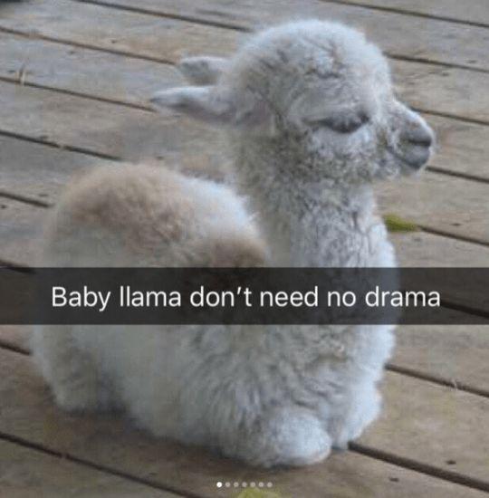 Photo of 37 Happy Snappy Animal Snapchats zum Lachen bringen #memes #jokes #funny #humor – Memes