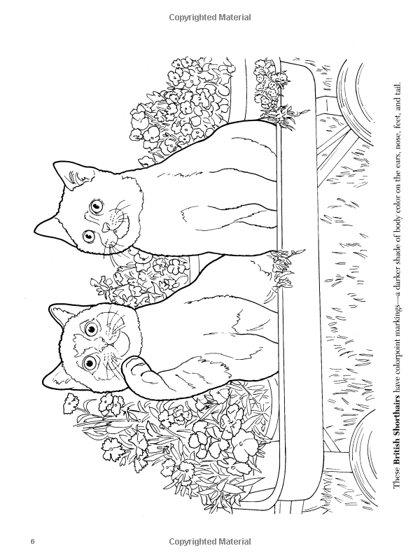 the cat lovers coloring book dover nature coloring book ruth soffer 9780486462004