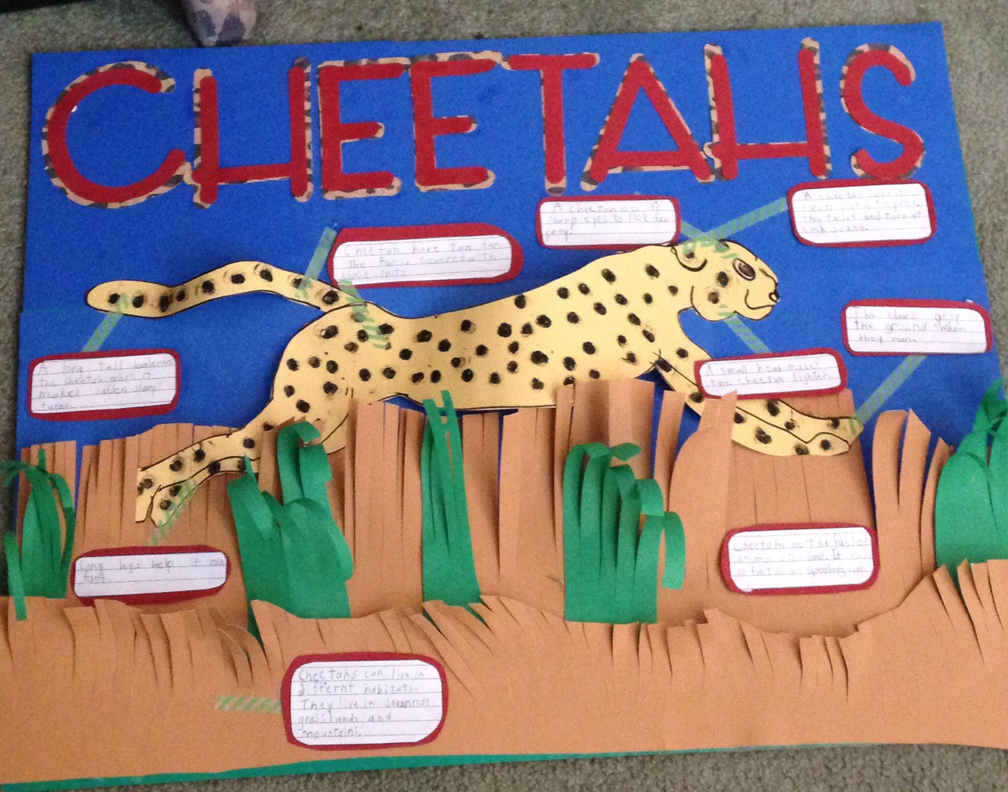 Cheetah Project Poster School Projects For Primary School