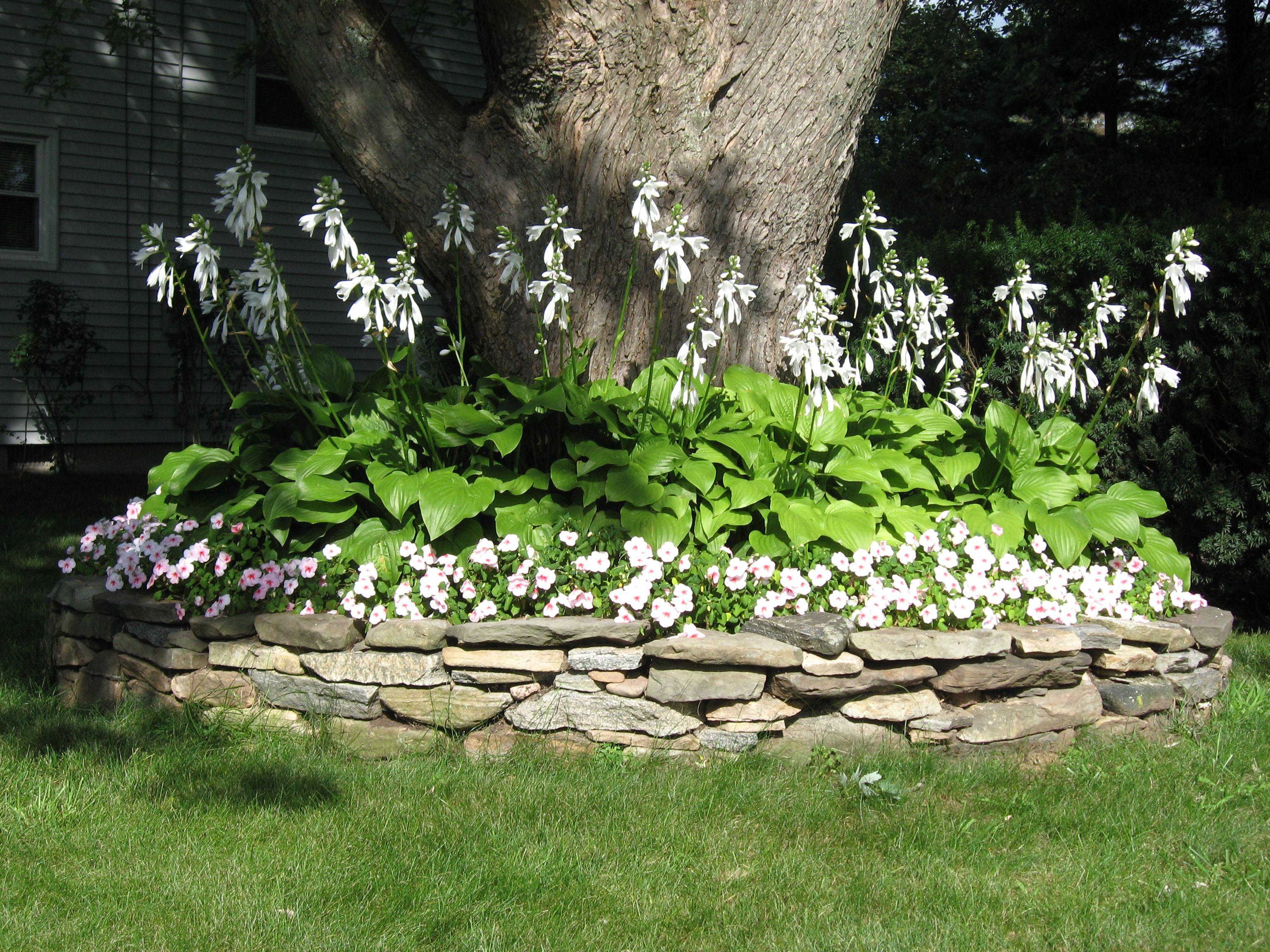 Garden ideas Hosata and Impatiens Great combo