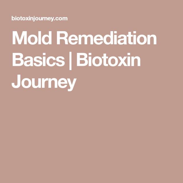 Mold Remediation Basics | Biotoxin Journey | Mold ...